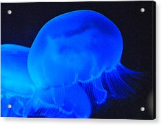 Neon Jelly Blue II Acrylic Print