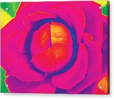 Neon Lettuce Rose Acrylic Print