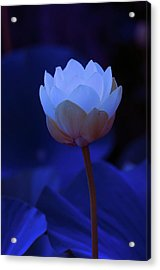 Acrylic Print featuring the photograph Neon Lotus by Carolyn Dalessandro