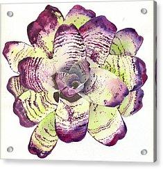 Neoregelia 'freeman's Vision' Acrylic Print