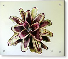 Neoregelia Painted Delight Acrylic Print by Penrith Goff