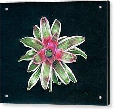 Neoregelia Terry Bert Acrylic Print