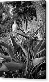 Nepenthe Bird Of Paradise B And W Acrylic Print by Joyce Dickens