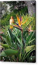 Nepenthe Bird Of Paradise Acrylic Print by Joyce Dickens