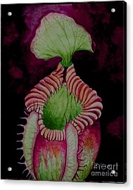 Nepenthes Villosa Acrylic Print by Edoen Kang