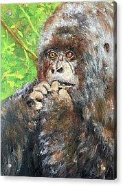 Nervous Mama Gorilla Acrylic Print