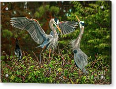Nest Landing Acrylic Print