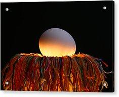 Nest Acrylic Print by Mark  Ross