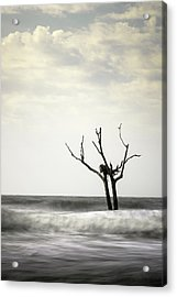 Nesting Acrylic Print by Ivo Kerssemakers