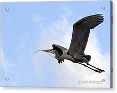 Nesting Material Acrylic Print by Don Durfee
