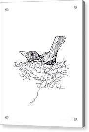 Nesting Acrylic Print by Michael Ciccotello