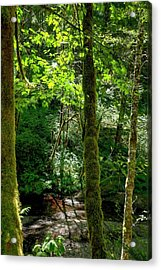 Nestucca River 3039 12x18 Acrylic Print by Jerry Sodorff