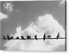 Network Of The Bird Line  Acrylic Print by Jorgo Photography - Wall Art Gallery