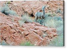 Nevada Rocks 31c Acrylic Print