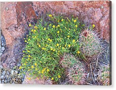 Acrylic Print featuring the photograph Nevada Yellow Wildflower by Linda Phelps
