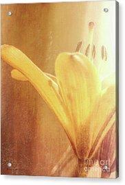 Never A Shadow Acrylic Print