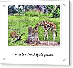 Acrylic Print featuring the photograph Never Be Ashamed by Traci Cottingham
