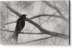 Nevermore Acrylic Print by Melinda Wolverson