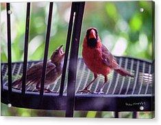 New Baby Cardinal Acrylic Print