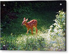 New Backyard Visitor Acrylic Print by Lori Tambakis
