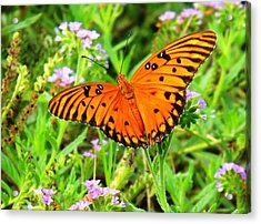 Windows From Heaven Orange Butterfly Acrylic Print