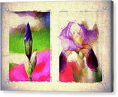New Birth Acrylic Print