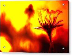 New Bloom Acrylic Print by Jim Dohms