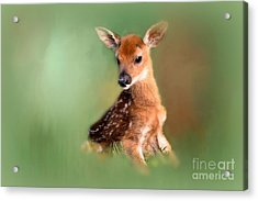 Acrylic Print featuring the photograph New Born Baby by Brenda Bostic