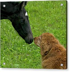 New Born Touching Noses Acrylic Print