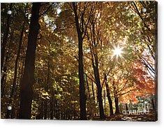 New England Autumn Forest Acrylic Print by Erin Paul Donovan