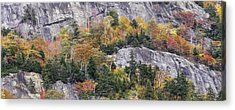 New England Foliage Burst Acrylic Print by Expressive Landscapes Fine Art Photography by Thom