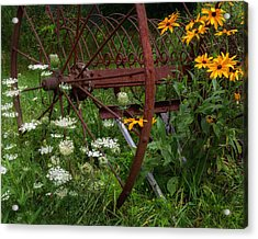 New England Summer Wild Flowers Photograph By Bill Wakeley