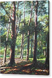 New Forest Trees With Shadows Acrylic Print by Martin Davey