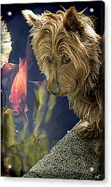 New Friends Acrylic Print by Chris Lord