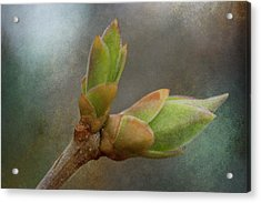 New Growth 17-1 Acrylic Print by WB Johnston