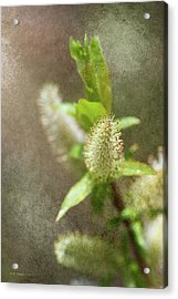 New Growth 19 Acrylic Print by WB Johnston