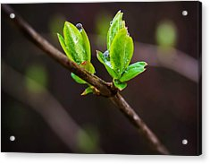 New Growth In The Rain Acrylic Print