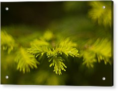 New Growth Acrylic Print by R J Ruppenthal