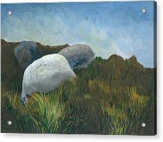 New Guinea Fowl Acrylic Print