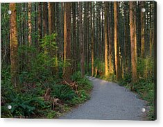 New Hiking Trail Acrylic Print by Michael Russell