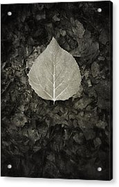 New Leaf On The Old Acrylic Print by Scott Norris