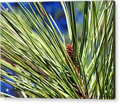Acrylic Print featuring the photograph New Life by Betty Northcutt