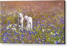 Acrylic Print featuring the digital art New Life by Eva Lechner