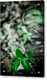 New Life From Ruins  Acrylic Print by Off The Beaten Path Photography - Andrew Alexander