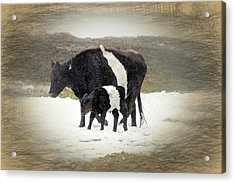 New Life In A Winter Snowfall Acrylic Print by Donna Kennedy
