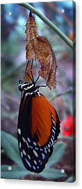 New Life Acrylic Print by Robert Knight