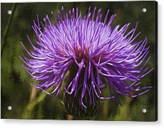 New Mexican Thistle Acrylic Print