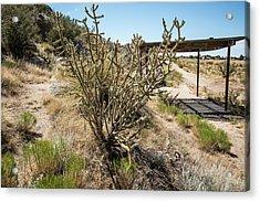 New Mexico Cholla Acrylic Print