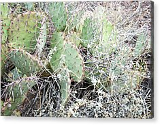 Acrylic Print featuring the photograph New Mexico Green Prickly Pear Cactus by Andrea Hazel Ihlefeld