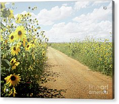Acrylic Print featuring the photograph New Mexico Sunflower Road by Andrea Hazel Ihlefeld